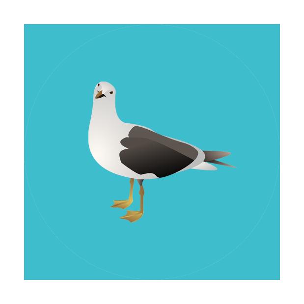 seabird icon